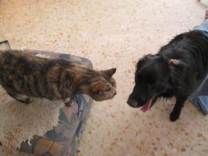 Granma Trixi felt very threatened for a long time when the young dog arrived and wanted to play with her