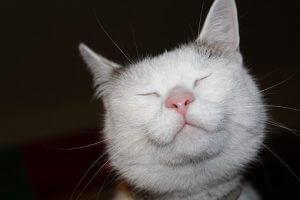 cat-1329956__340
