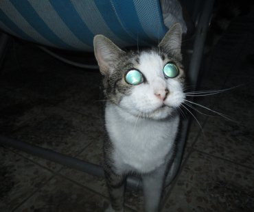 How a blind cat finds its way in new environment