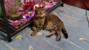 The ex-stray cat Freddie