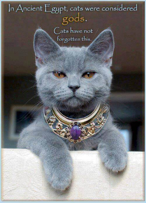 Your cat – a descendent of the sacred and magic animal in history – by Els Vink