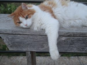 cat lying on a bench