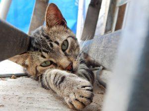 cat-633071__340