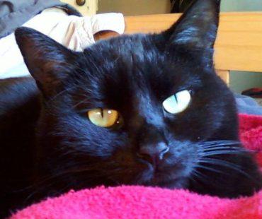 Black cat of Brendie