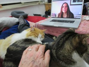 A person's hand touching cats, all watching the computer screen