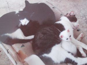 2 adult cats and 2 baby cats