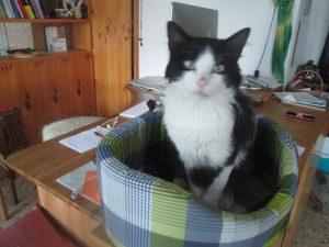 Oli the ex-stray cat, sits on my desk near where I am writing his story