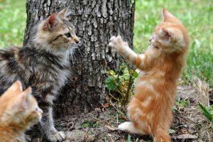 cats-204184__340