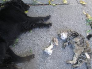 Cat and dog sleeping on the flooe, a bone between them