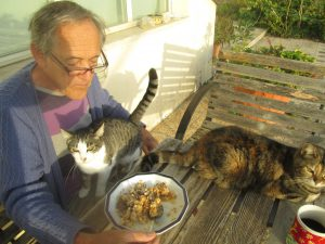 Cat on Mark's legs, other cat on table during breakfast outside