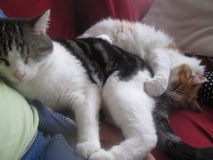 2 cats embracing each other near a sitting person