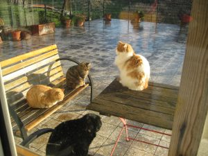 4 cats sitting on bences and table after the rain.