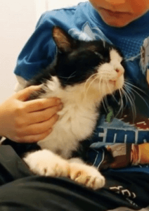 The cat of the article,it looks like Oli