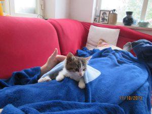 The new kitten Sunny