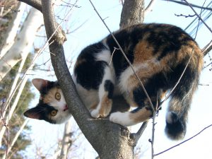 black-white-red cat on tree