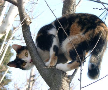 Cat-egories and Hair-archies – What your cats can teach you