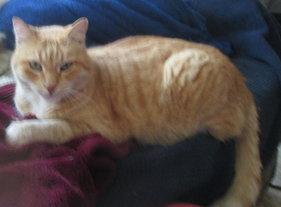 Mundl, or Rosenmund, the RED cat