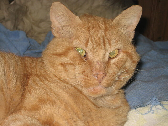 Prince, the orange Tomcat who mastered the trap.