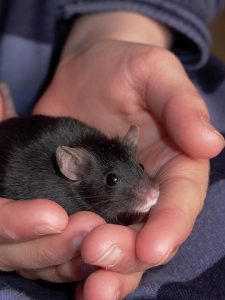 a mouse in hand