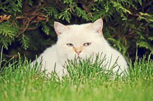 cat, Pallino enjoyed just lying in the sun