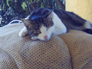 cat Filippo lying on soft surface