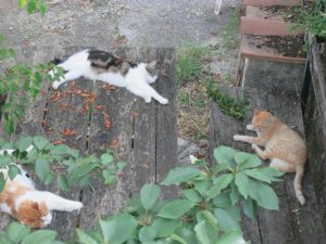 Cats taking a nap during the hot hours of the day