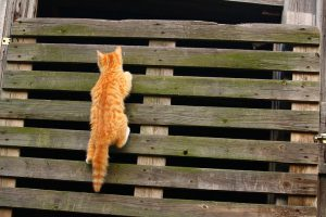 cat climbing the fence