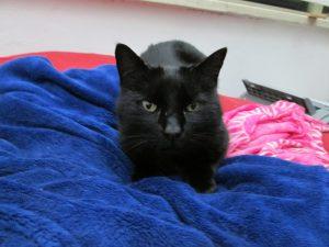 Morle, the super neurotic black cat