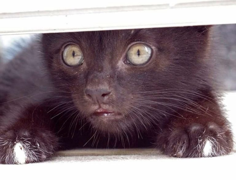 black kitten hiding under the door, watching