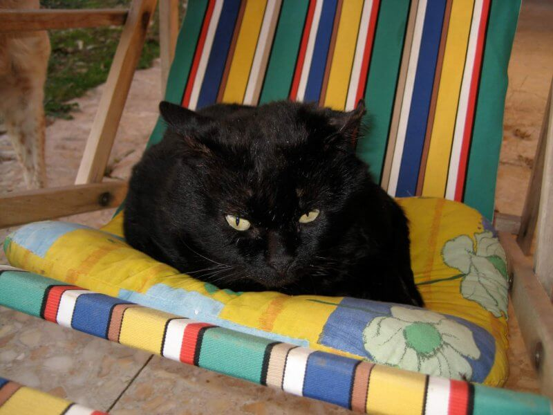 Cat personalities: cats are not just cats!