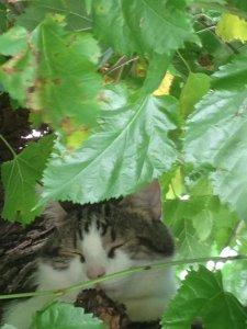 Cat Sunny in the tree