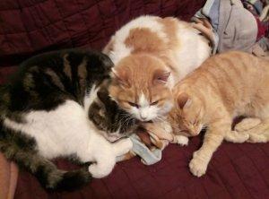3 cats Sunny, Luzzy ,Mundl